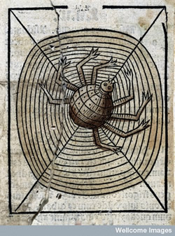 image of spider from Wellcome images