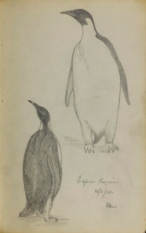 Sketch by William Martin of Emperor Penguins