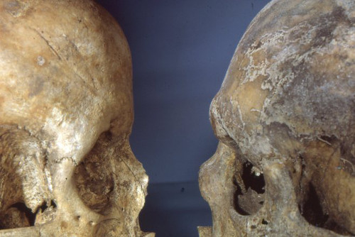 Archaeological skulls featuring typically male and female traits, c.1970.