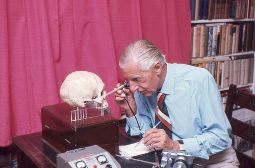 Calvin Wells examining a human skull in his office