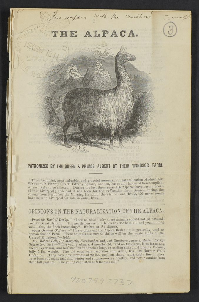 Page from The alpaca, 1844